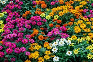 How to Grow Eye-Popping Zinnia Flowers