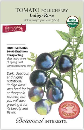 A close up vertical image of a seed packet showing an illustration of 'Indigo Rose' cherry tomatoes to the right of the frame with printed text to the top, bottom, and the left.