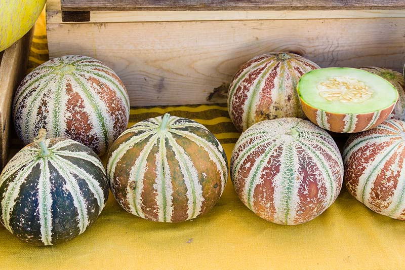 A close up horizontal image of whole and sliced kajari melons at a farmers markket.