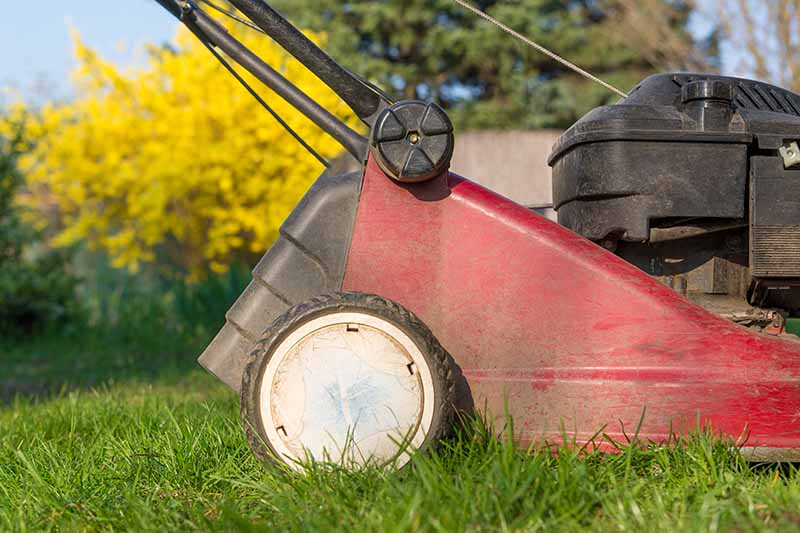 A close up horizontal image of a lawnmower with shrubs and blue sky in soft focus in the background.