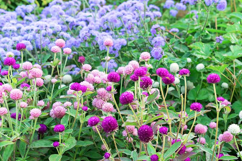 A horizontal image of a flower garden planted with pink, purple, and blue flowers.