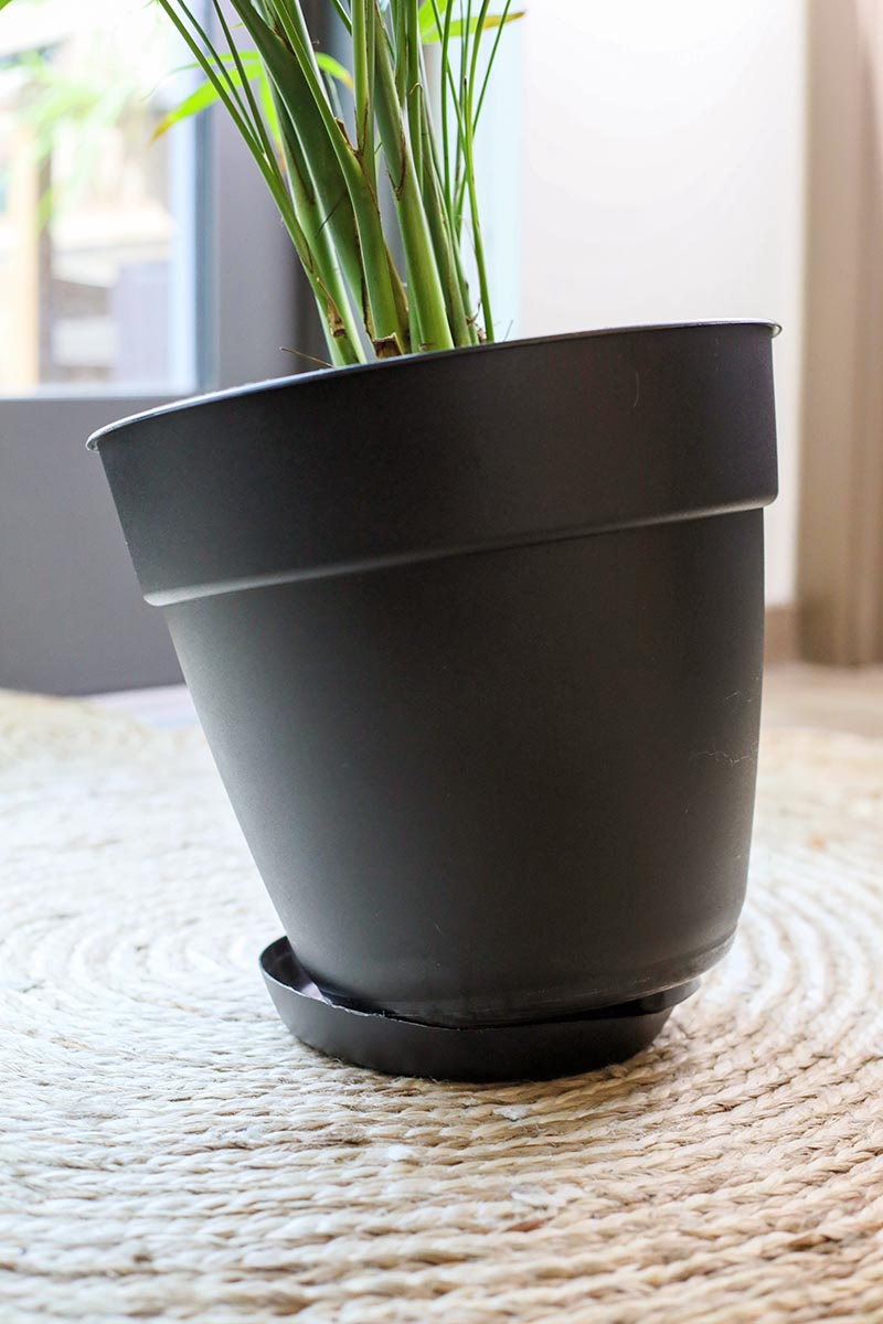 A close up horizontal image of a houseplant growing in a plastic pot with a drip tray underneath set on a rug indoors.