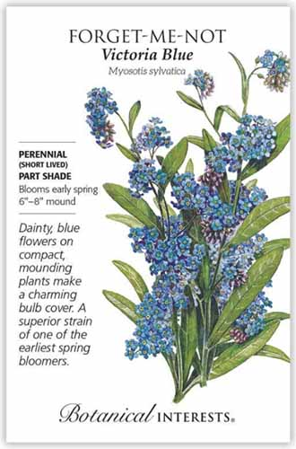 A close up vertical image of a seed packet with text to the left of the frame and an illustration of 'Blue Victoria' forget-me-nots to the right.