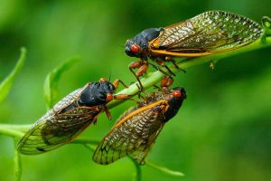 Avoid Cicada Tree Damage with These Tips