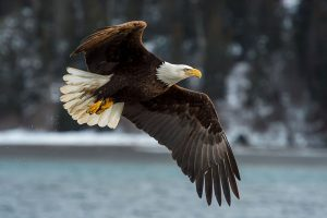 A Review of the National Audubon Society Birds of North America