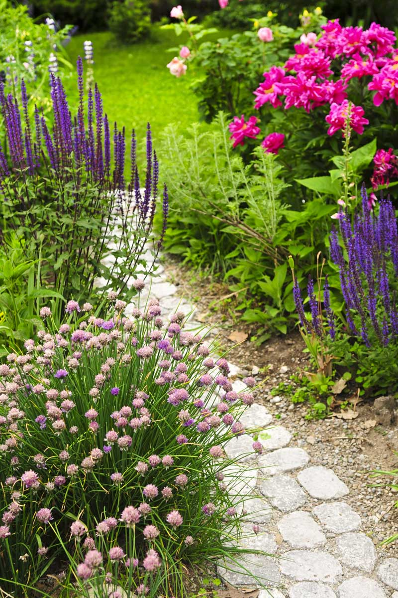 A stone pathway in meandering through a cottage garden, with pink and purple flowers.