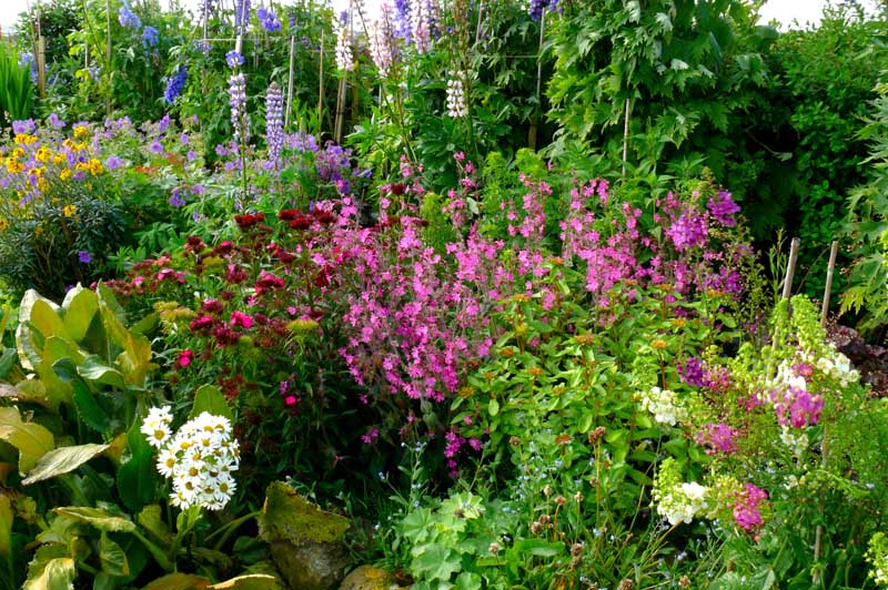 Cottage garden filled with flowers in shades of yellow, purple, blue, pink, and white, of varying heights.