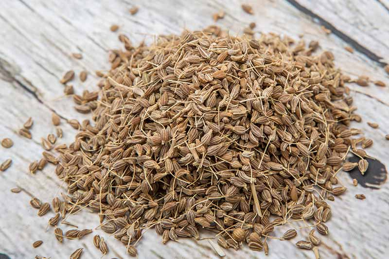 A close up horizontal image of dried aniseed in a pile on a wooden surface.