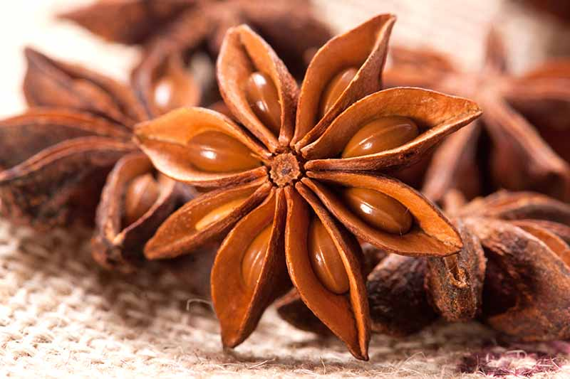 A close up horizontal image of dried star anise set on a fabric surface.
