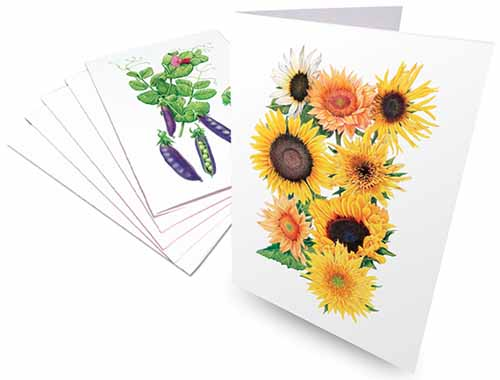 A close up horizontal image of notecards with colorful illustrations of popular garden plants, isolated on a white background.