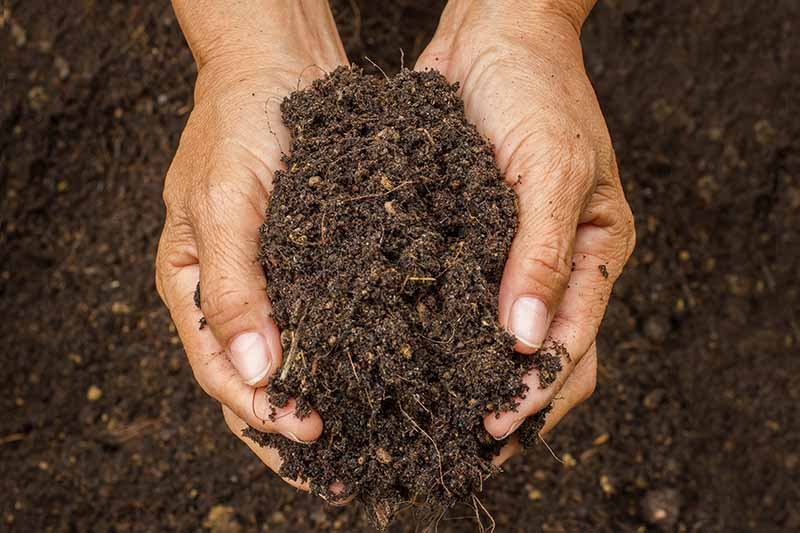 A close up horizontal image of two hands from the top of the frame holding rich soil in the garden.