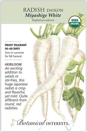 A close up vertical image of 'Mayashige White' daikon radish seed packet with text to the left of the frame and an illustration of the vegetable to the right.