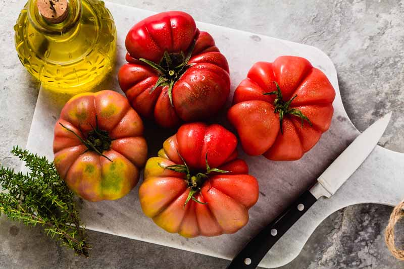 A close up horizontal image of four red 'Brandywine' tomatoes set on a marble cutting board with olive oil, thyme, and a knife.