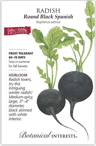 A close up vertical image of the seed packet of 'Round Black Spanish' radish with text to the left of the frame and an illustration of the vegetable to the right.