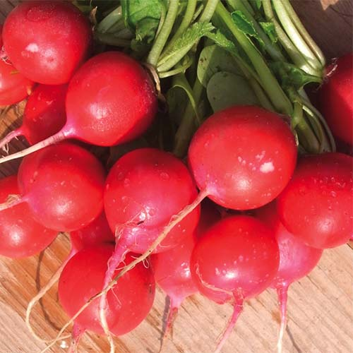 A close up square image of a bunch of 'Sora' radishes set on a wooden surface.