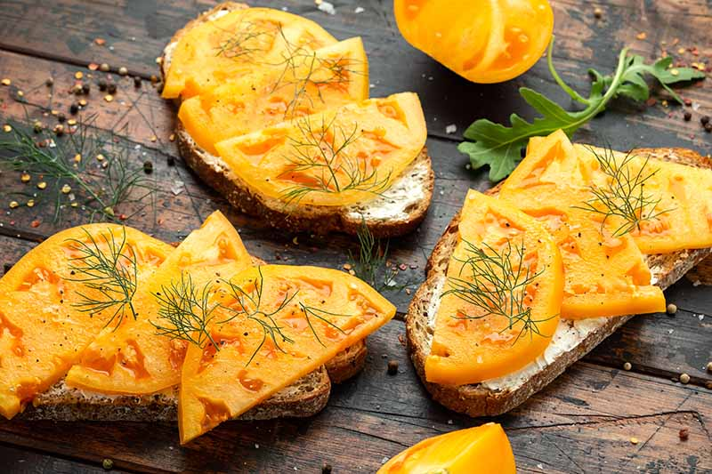 A close up horizontal image of sourdough toasts topped with yellow tomatoes set on a wooden table, with dill scattered around.