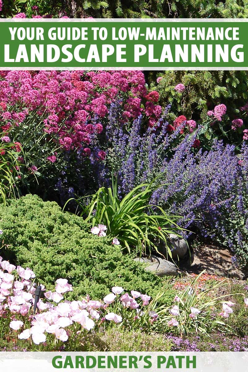 A collection of low maintenance shrubs on hilly lawn.