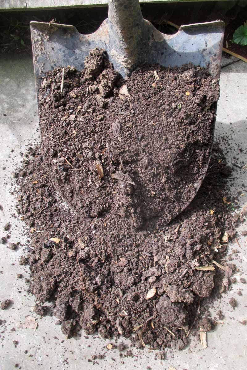 A close up vertical picture of a large metal spade digging up garden soil.