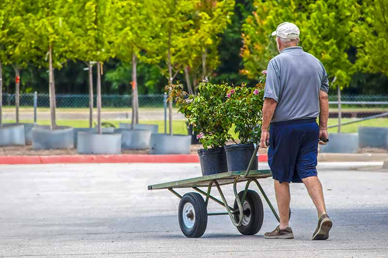 A horizontal image of a man pushing a trolley with shrubs for purchase from a garden center.