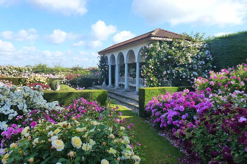 A horizontal image of a formal garden filled with David Austin roses and neat hedges with a pavilion on a blue sky background.