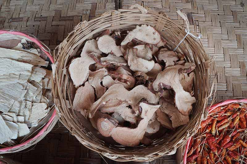 A close up horizontal image of dried slices of galangal placed in a wicker basket.