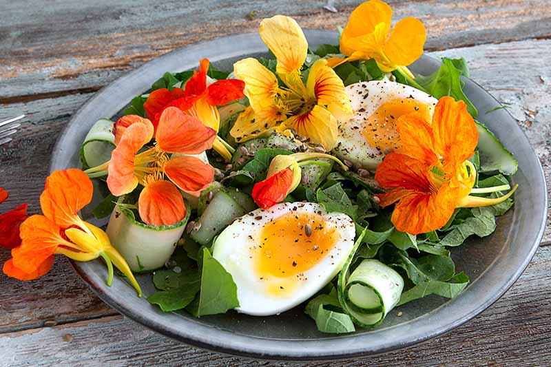 A close up horizontal image of a dark gray plate of a fresh summer salad garnished with egg and nasturtium flowers set on a wooden surface.