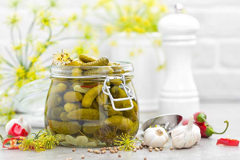 A close up horizontal image of a jar of pickled gherkins set on a kitchen counter surrounded by herbs and spices.