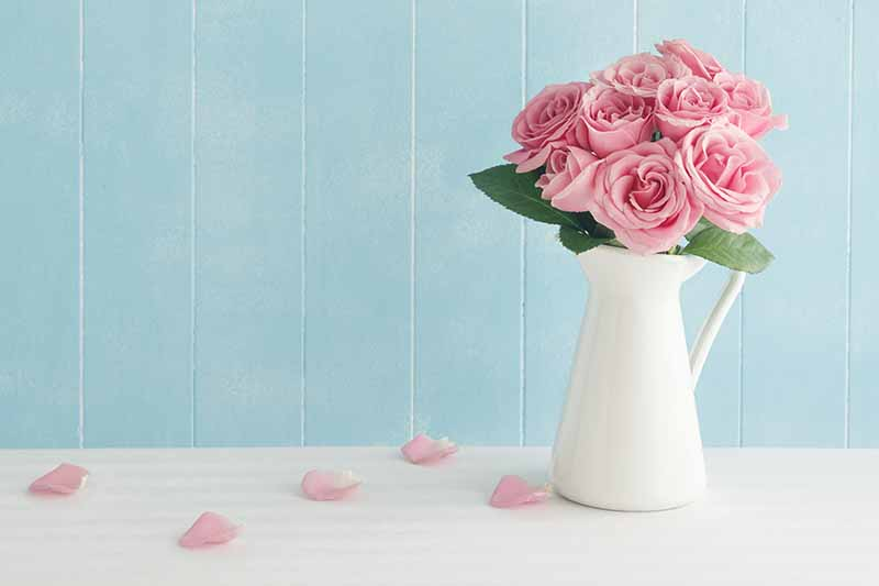 A close up horizontal image of a white vase with pink flowers set on a white surface with a blue wall in the background.