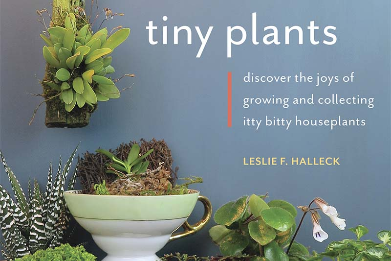 """A close up horizontal image of part of the cover of the book """"Tiny Plants"""" by Leslie F. Halleck."""