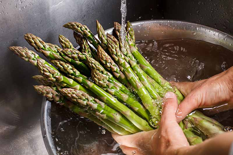 A close up horizontal image of two hands washing asparagus spears in a metal bowl under the faucet.