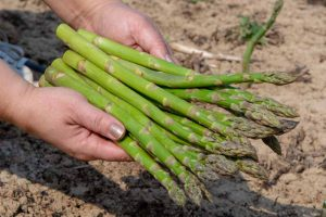 When and How to Harvest Asparagus
