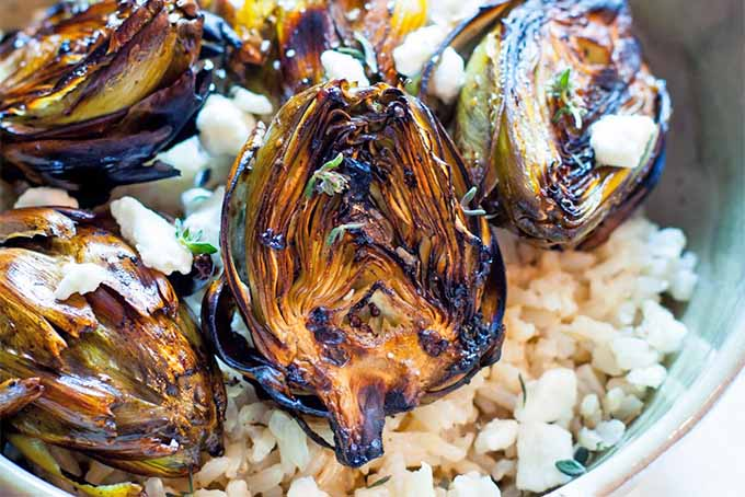 A close up horizontal image of grilled artichoke halves set on a bed of rice.