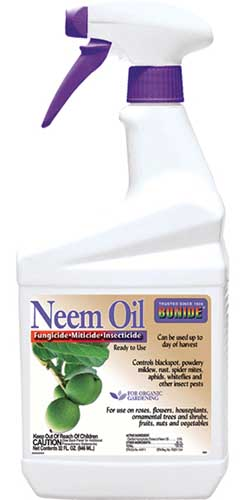 A close up vertical image of the packaging of Bonide Neem Oil isolated on a white background.