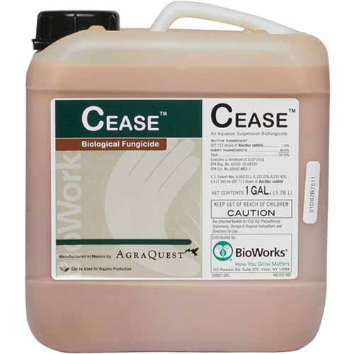 A close up square image of a plastic container of CEASE, a biological fungicide, isolated on a white background.
