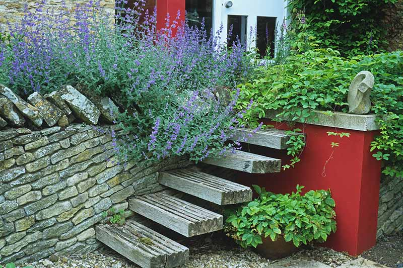 A close up horizontal image of a stone wall with wooden steps leading up to a residence.