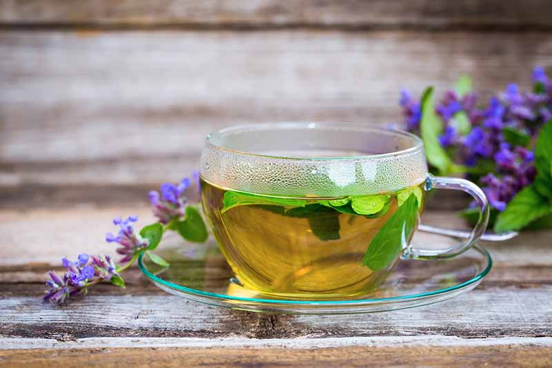 A horizontal image of a clear glass cup containing freshly infused herbal tea set on a wooden surface with sprigs of purple flowers in the background.