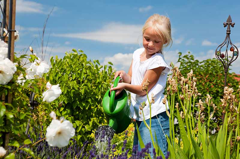 A close up horizontal image of a blonde child holding a green watering can in a flower garden pictured on a blue sky background.