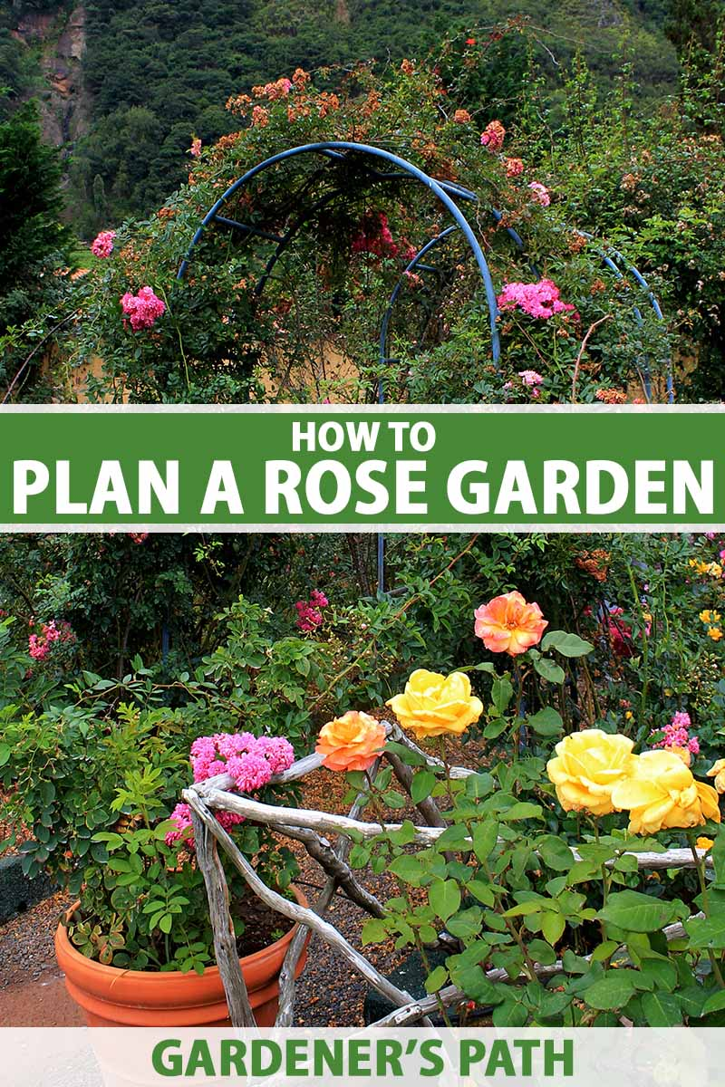 A vertical image of a garden with roses growing in beds, containers, and over an arbor. To the center and bottom of the frame is green and white printed text.