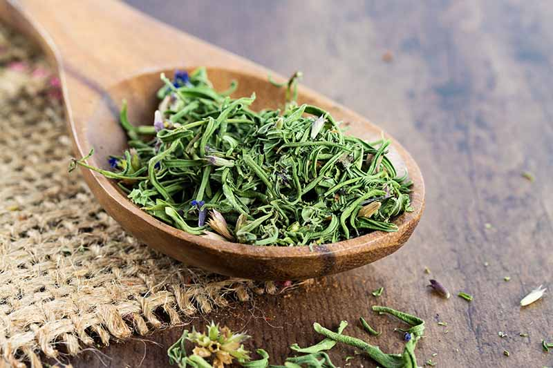 A close up horizontal image of dried hyssop leaves and flowers in a wooden spoon set on a wooden surface.