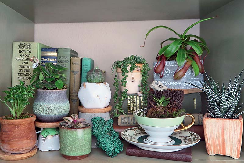 A close up horizontal image of a shelf with books and miniature plants growing in decorative pots.