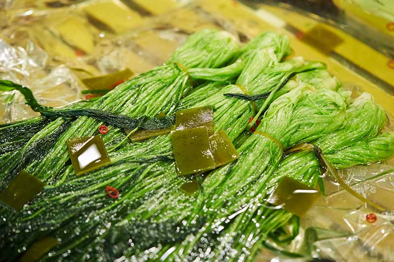 A close up horizontal image of bunches of pickled mizuna.