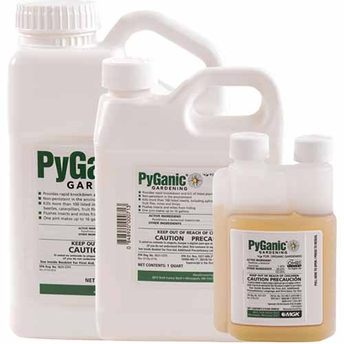 A close up square image of three different sized bottles of PyGanic Gardening Insecticide isolated on a white background.