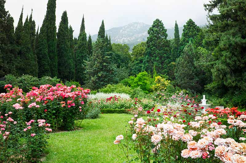 A horizontal image of a garden with a variety of different rose shrubs flanking a lawn area with trees and a hill in the background.