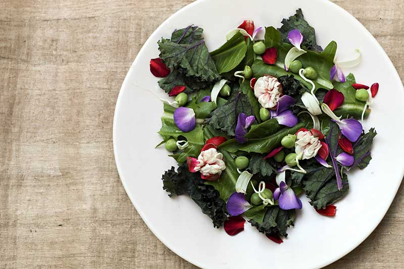A close up top down horizontal image of a white plate with a fresh salad that contains fuchsia flowers and berries set on a wooden surface.