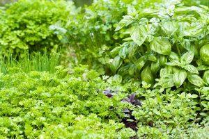 Tips for Growing an Abundant Edible Herb Garden
