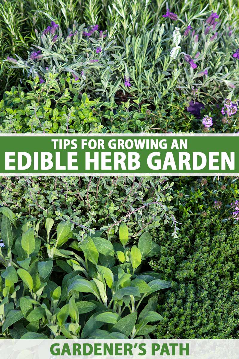 A close up vertical image of a variety of different types of herbs growing in the garden. To the center and bottom of the frame is green and white printed text.