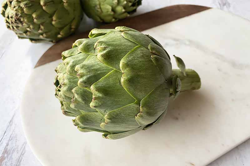 A close up horizontal image of a freshly harvested artichoke set on a marble surface.