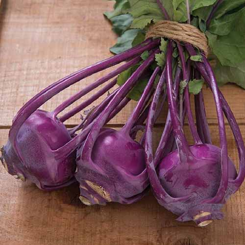 A close up square image of 'Azur Star' purple kohlrabi set on a wooden surface.