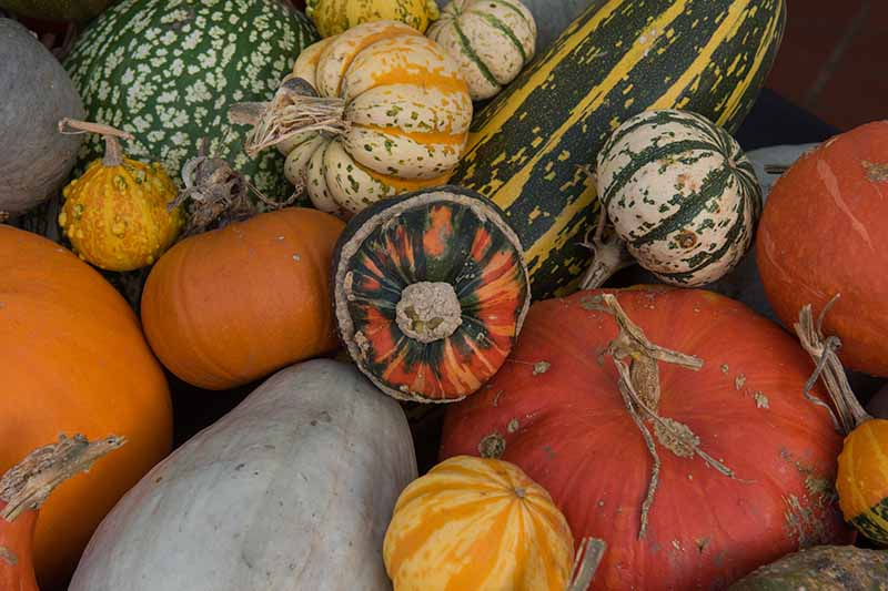 A close up horizontal image of a pile of different types of winter squash.