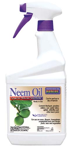 A close up vertical image of a bottle of ready to spray Bonide Neem Oil isolated on a white background.